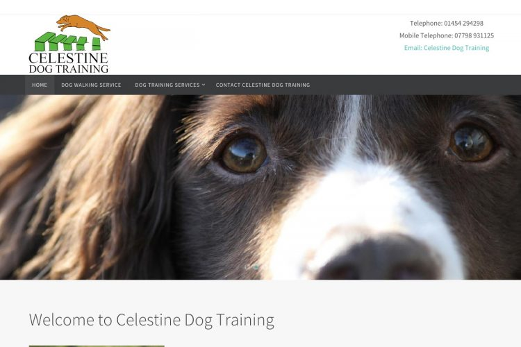 Celestine Dog Training
